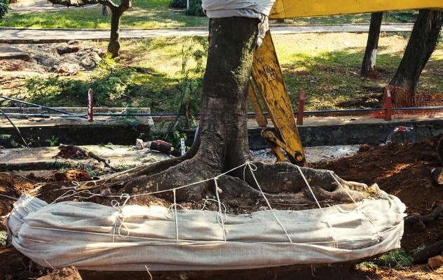 treeresortoration1