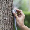 Осмотр и диагностика деревьев